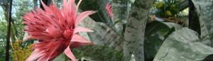 cropped-DSC01224.jpg