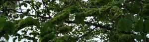 cropped-DSC04392.jpg